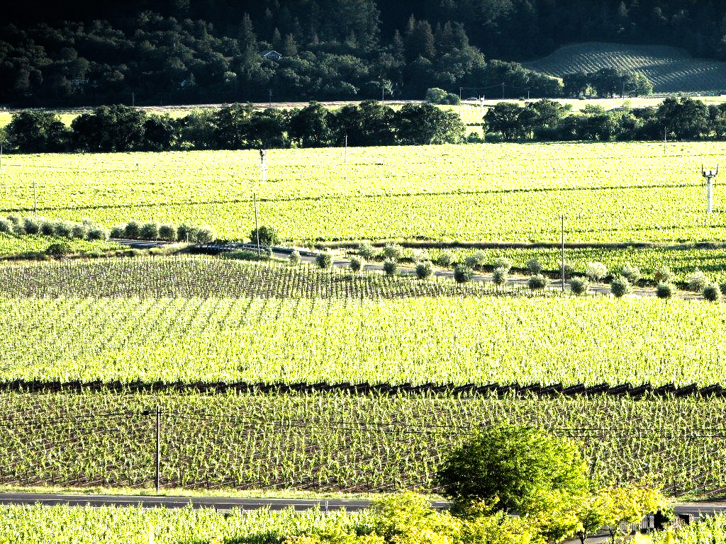 Saviez Vineyard management in Wine Country.