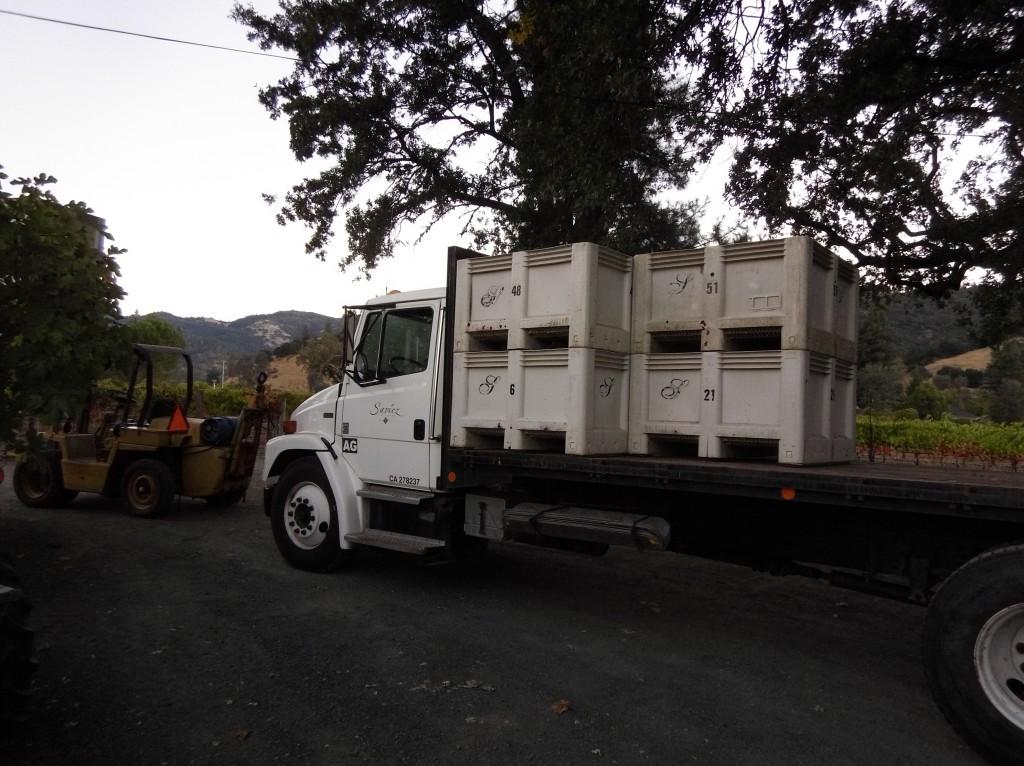 2016 harvest in Napa Valley
